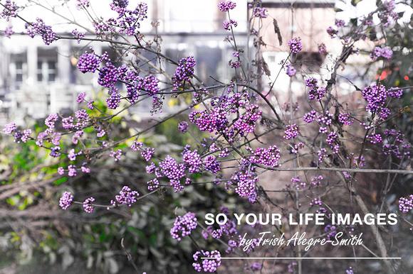 blogpost_lookingbackto2015_soyourlifeimages_2015_wm_web